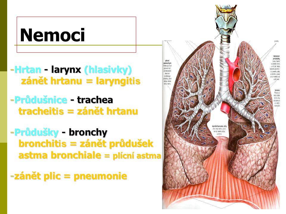 Nemoci -Hrtan - larynx (hlasivky) zánět hrtanu = laryngi tis zánět hrtanu = laryngi tis -Průdušnice - trachea tracheit is = zánět hrtanu tracheit is =