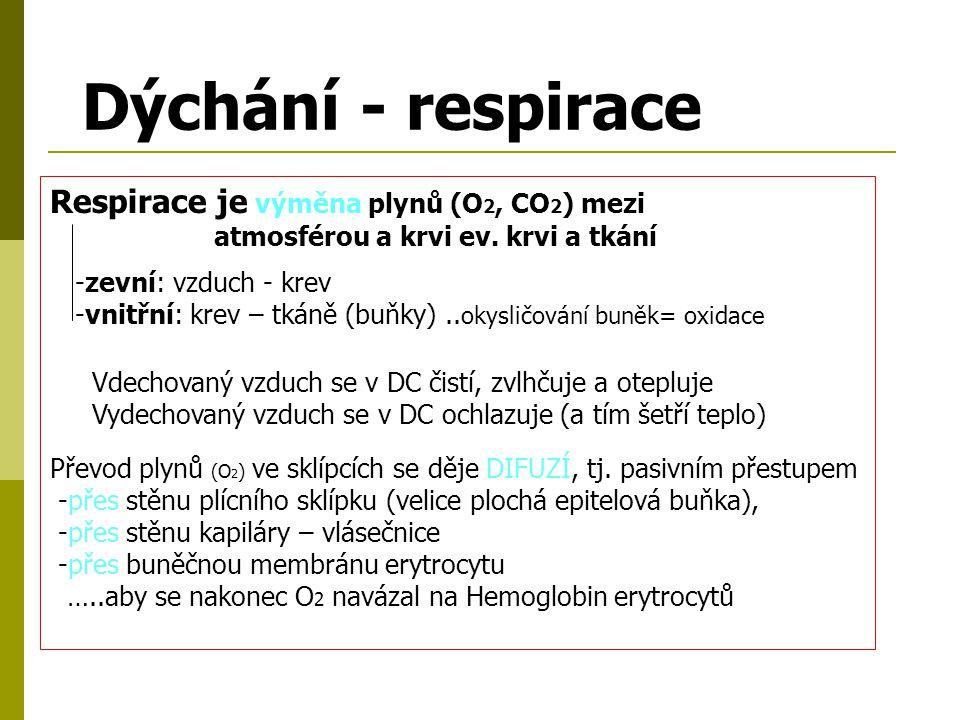 Inspirium = vdech = aktivní děj za pomoci dýchacích svalů (bránice, mezižeberní svaly) a vytvoření podtlaku v dutině hrudní Expirium = výdech = pasivní děj (pružnosti plic a hrudní stěny dojde k vytlačení vzduchu z plic a dýchacích cest) Dechový objem – 500ml (při námaze 1-2 litry) Vitální kapacita = množství vydechnutého vzduchu po hlubokém nádechu u můžů asi 4200ml, u žen 3200ml.