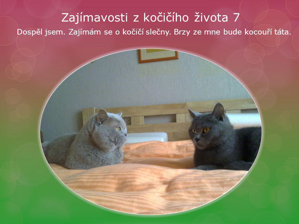 Zajímavosti z kočičího života 7 Dospěl jsem. Zajímám se o kočičí slečny.