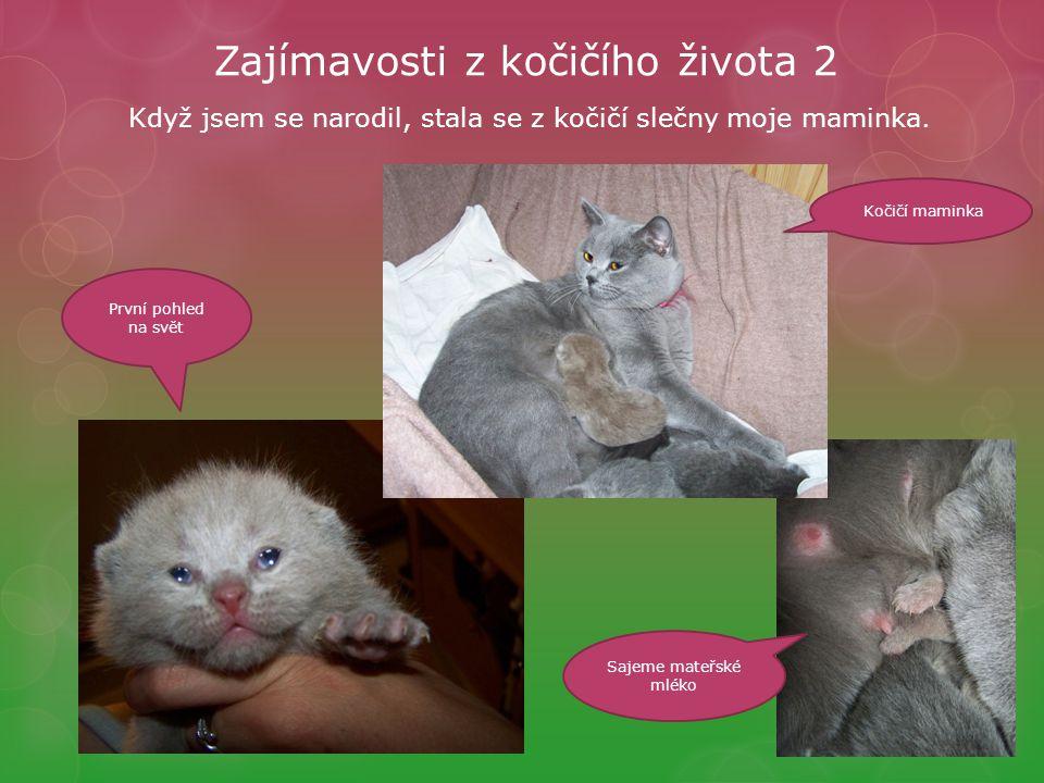 Zajímavosti z kočičího života 2 Když jsem se narodil, stala se z kočičí slečny moje maminka.