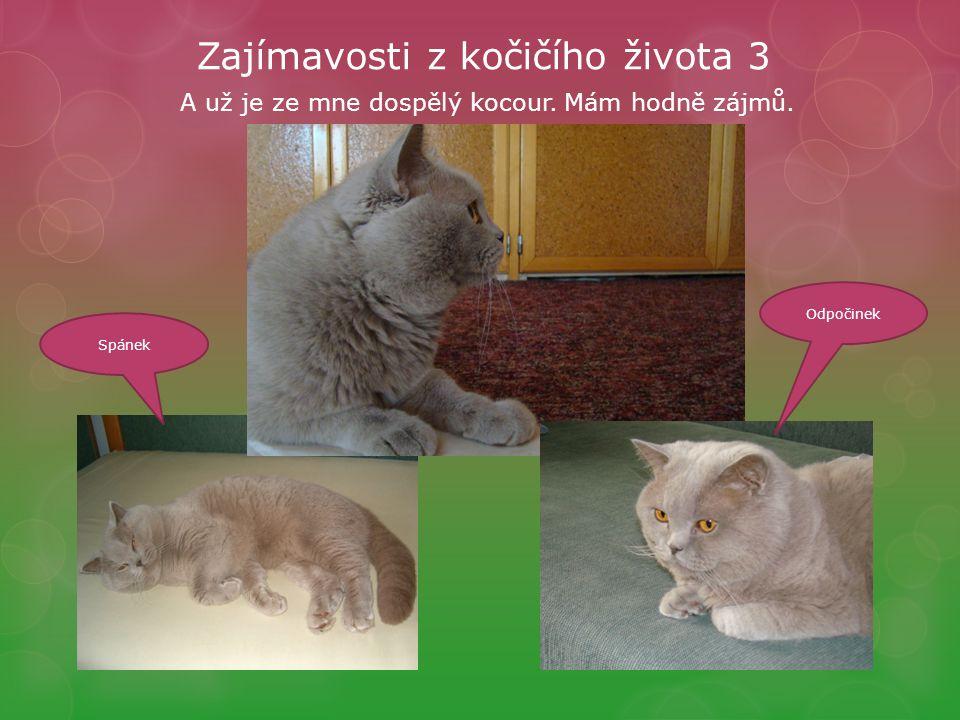Zajímavosti z kočičího života 3 A už je ze mne dospělý kocour. Mám hodně zájmů. Spánek Odpočinek