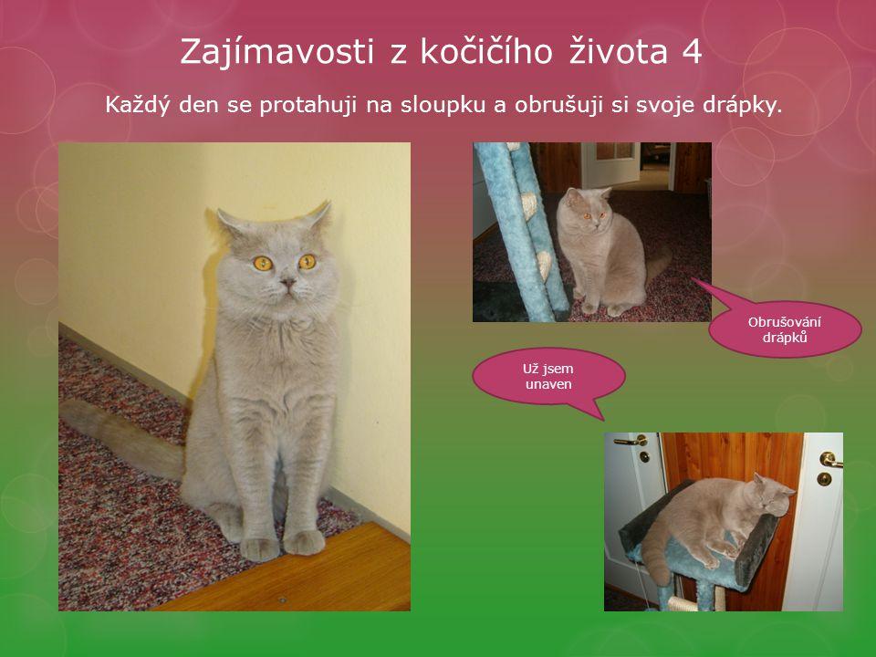 Zajímavosti z kočičího života 4 Obrušování drápků Už jsem unaven Každý den se protahuji na sloupku a obrušuji si svoje drápky.
