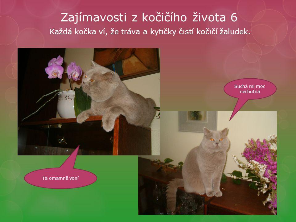 Zajímavosti z kočičího života 6 Každá kočka ví, že tráva a kytičky čistí kočičí žaludek.
