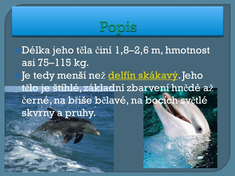  Délka jeho t ě la č iní 1,8–2,6 m, hmotnost asi 75–115 kg.  Je tedy menší ne ž delfín skákavý. Jeho t ě lo je štíhlé, základní zbarvení hn ě dé a ž