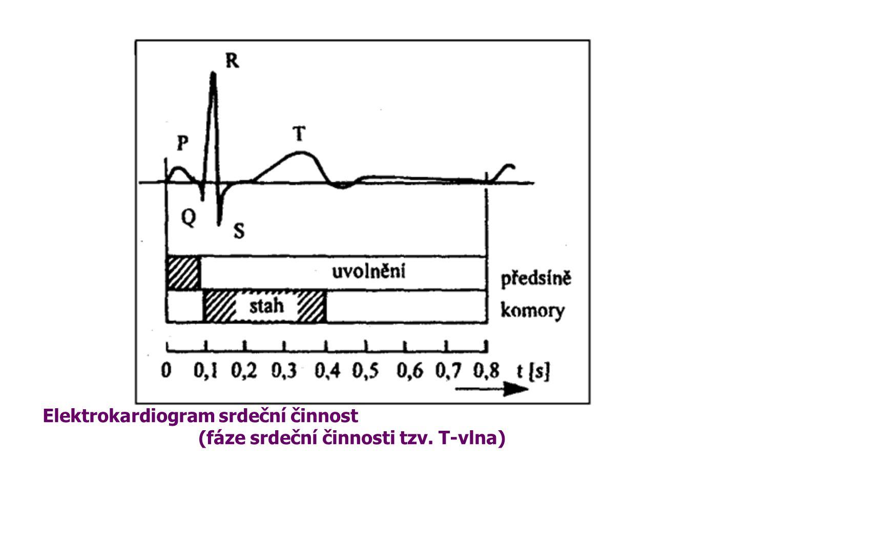Elektrokardiogram srdeční činnost (fáze srdeční činnosti tzv. T-vlna)