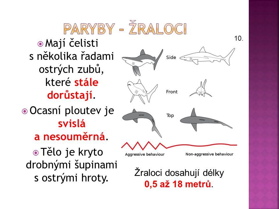  Jsou to mořští obratlovci, většinou draví (ústní otvor mají na spodní straně hlavy).