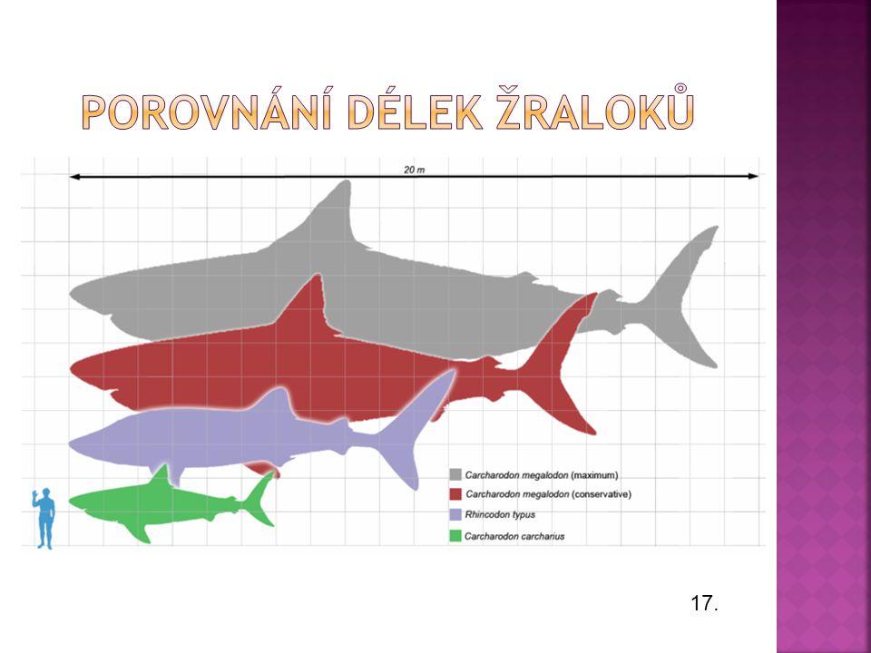  Měří 3 až 4 metry. Živí se rybami, ale může zaútočit i na jiné žraloky či na člověka.