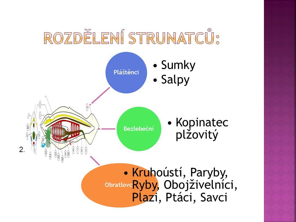  ČABRADOVÁ, V.; HASCH, F.Přírodopis 7, učebnice pro základní školy a víceletá gymnázia.