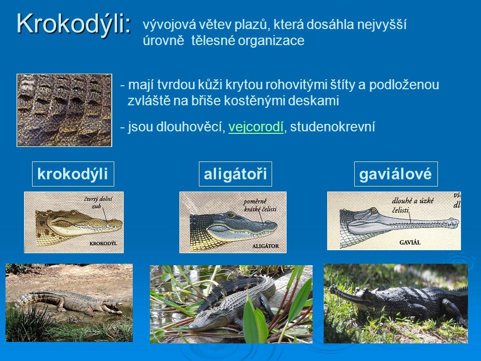 Krokodýli: - mají tvrdou kůži krytou rohovitými štíty a podloženou zvláště na břiše kostěnými deskami - jsou dlouhověcí, vejcorodí, studenokrevní krok