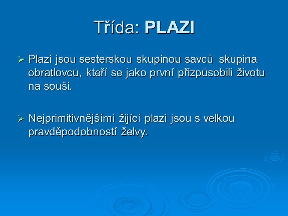 Třída: PLAZI  Plazi jsou sesterskou skupinou savců skupina obratlovců, kteří se jako první přizpůsobili životu na souši.  Nejprimitivnějšími žijící