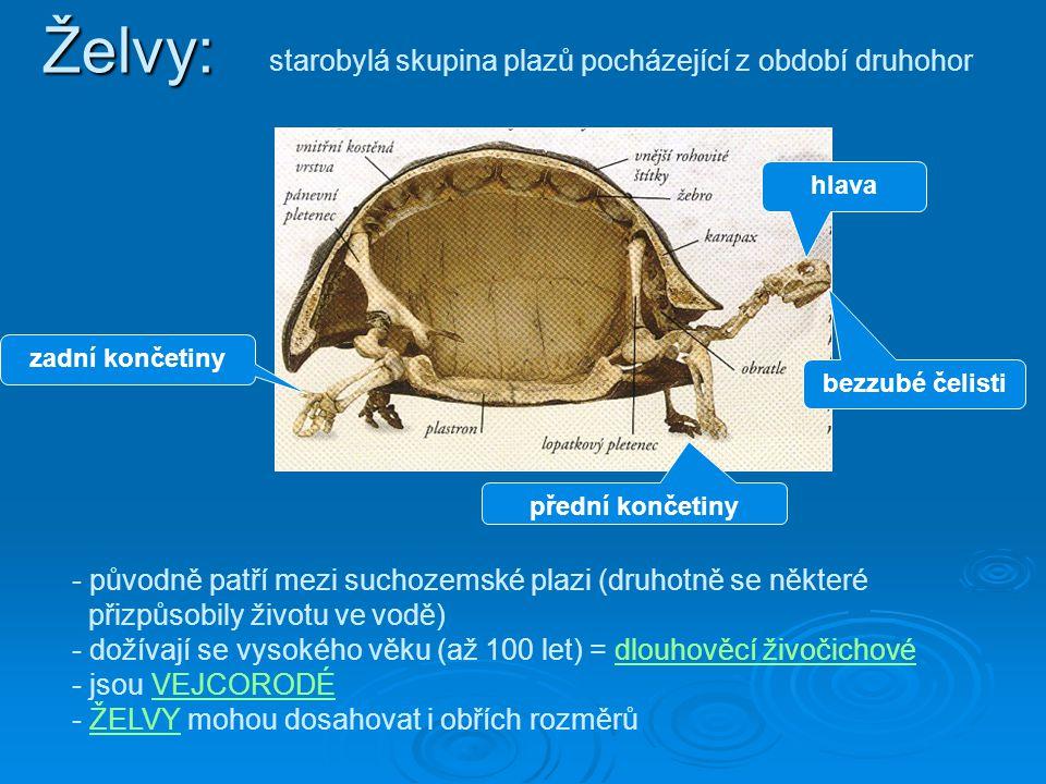 starobylá skupina plazů pocházející z období druhohor zadní končetiny hlava přední končetiny - původně patří mezi suchozemské plazi (druhotně se někte
