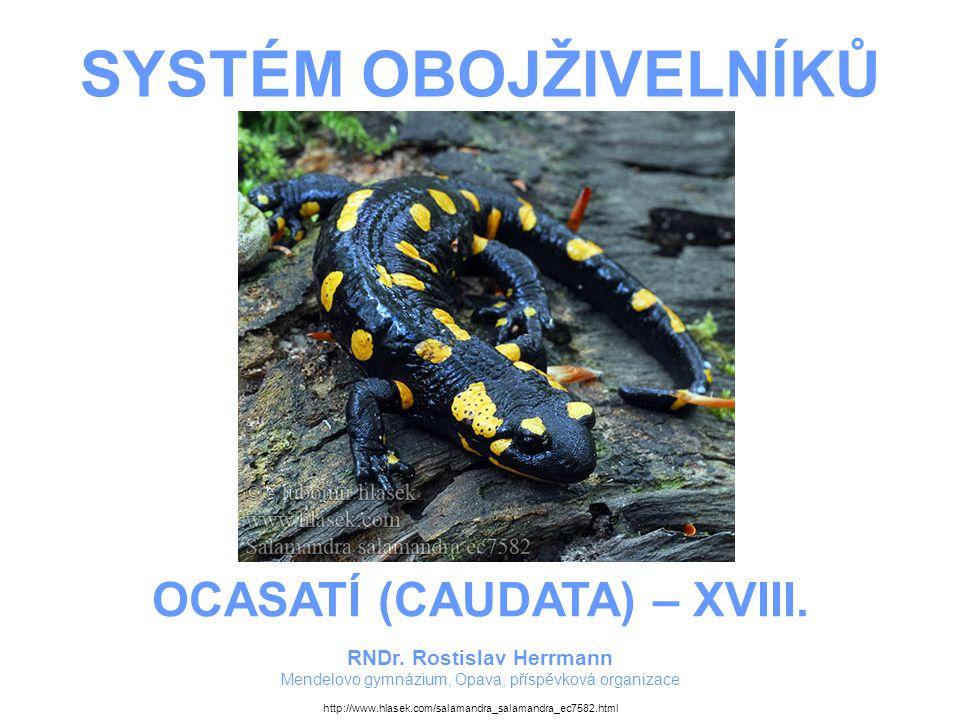 SYSTÉM OBOJŽIVELNÍKŮ RNDr. Rostislav Herrmann Mendelovo gymnázium, Opava, příspěvková organizace OCASATÍ (CAUDATA) – XVIII. http://www.hlasek.com/sala