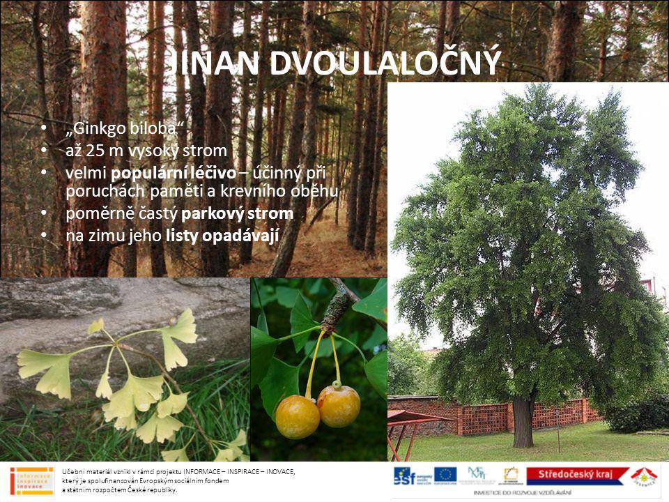 """JINAN DVOULALOČNÝ """"Ginkgo biloba"""" až 25 m vysoký strom velmi populární léčivo – účinný při poruchách paměti a krevního oběhu poměrně častý parkový str"""