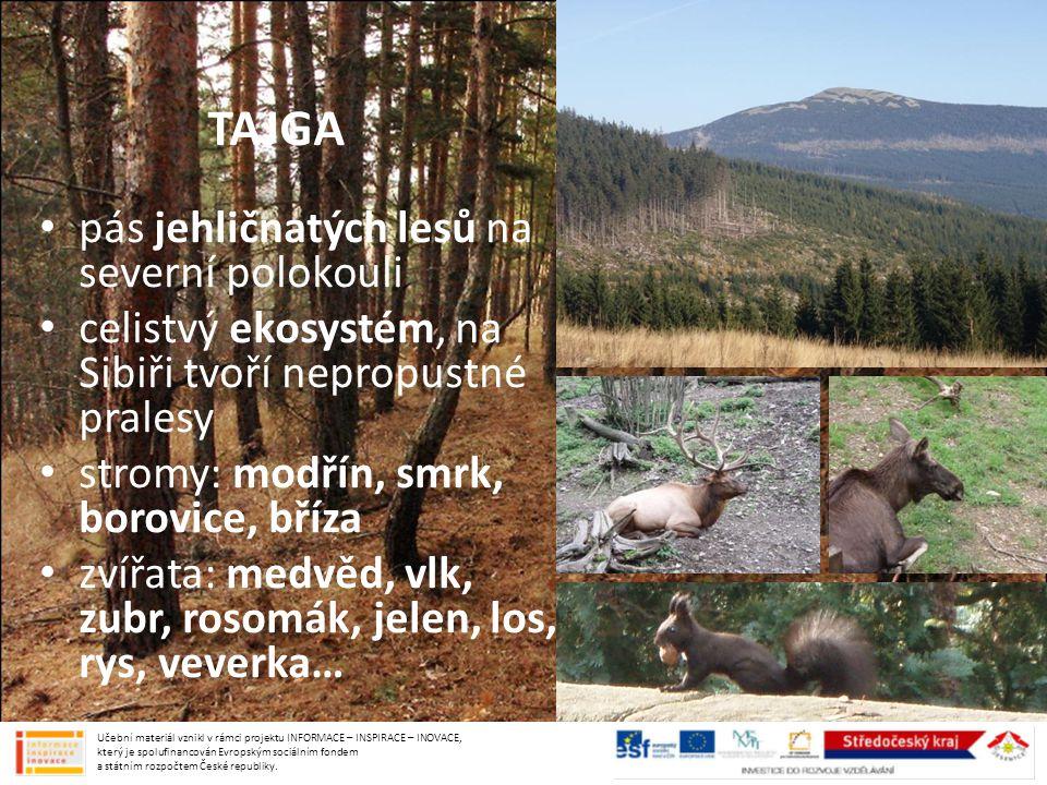 TAJGA pás jehličnatých lesů na severní polokouli celistvý ekosystém, na Sibiři tvoří nepropustné pralesy stromy: modřín, smrk, borovice, bříza zvířata