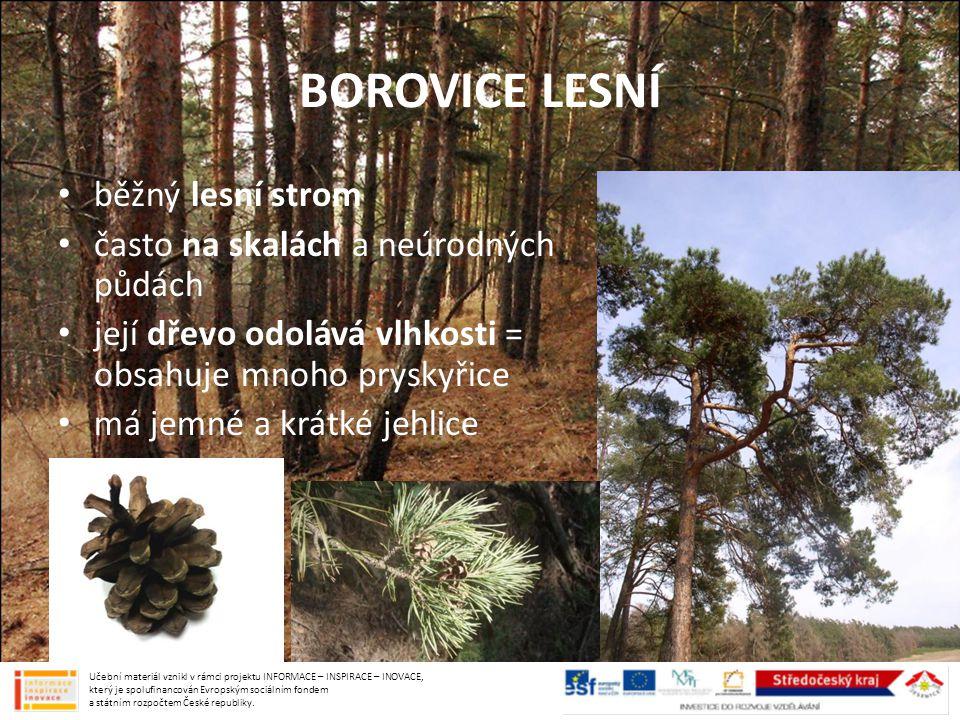 BOROVICE LESNÍ běžný lesní strom často na skalách a neúrodných půdách její dřevo odolává vlhkosti = obsahuje mnoho pryskyřice má jemné a krátké jehlic