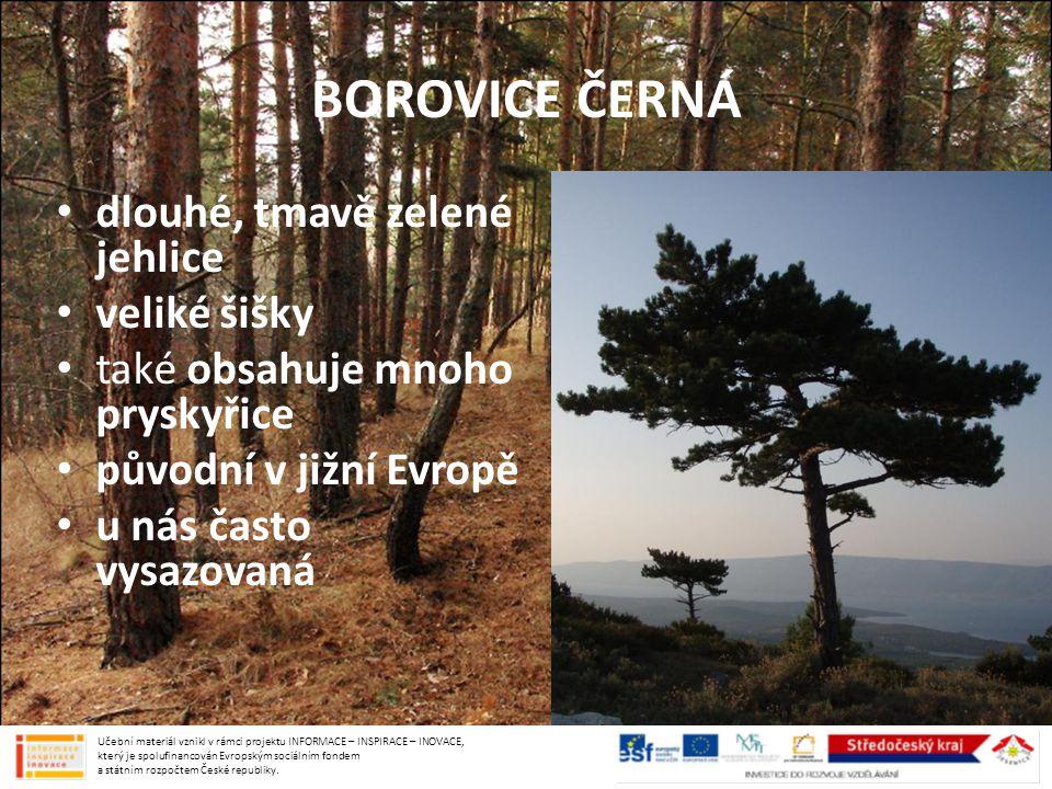 BOROVICE ČERNÁ dlouhé, tmavě zelené jehlice veliké šišky také obsahuje mnoho pryskyřice původní v jižní Evropě u nás často vysazovaná Učební materiál