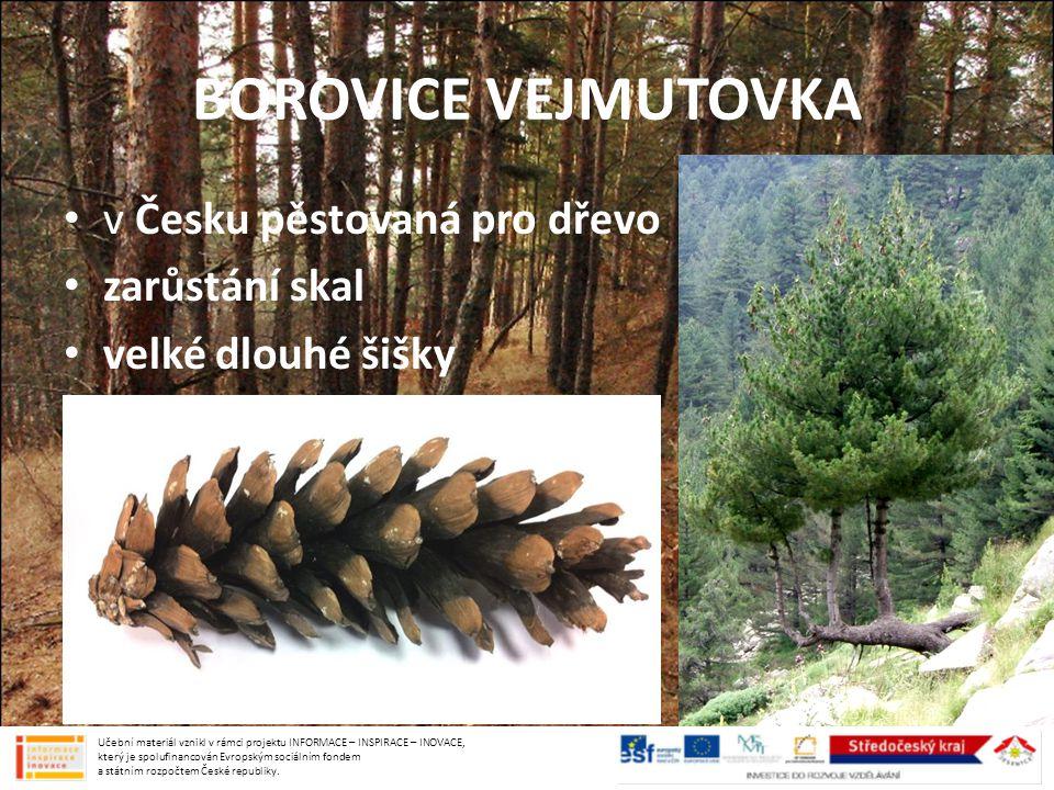 BOROVICE VEJMUTOVKA v Česku pěstovaná pro dřevo zarůstání skal velké dlouhé šišky Učební materiál vznikl v rámci projektu INFORMACE – INSPIRACE – INOV