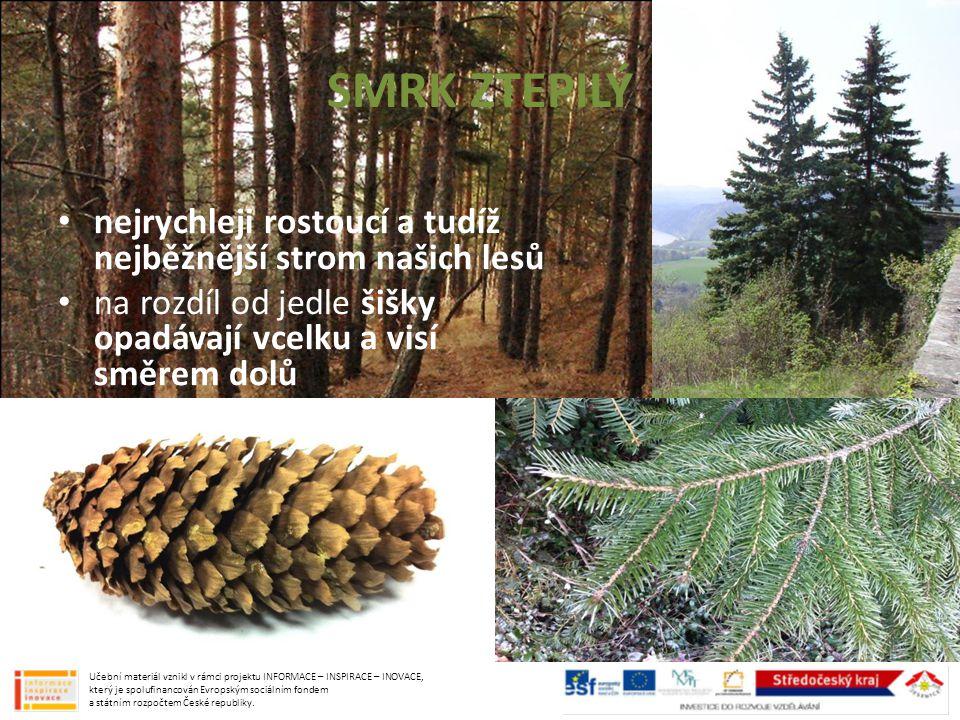 SMRK ZTEPILÝ nejrychleji rostoucí a tudíž nejběžnější strom našich lesů na rozdíl od jedle šišky opadávají vcelku a visí směrem dolů Učební materiál v