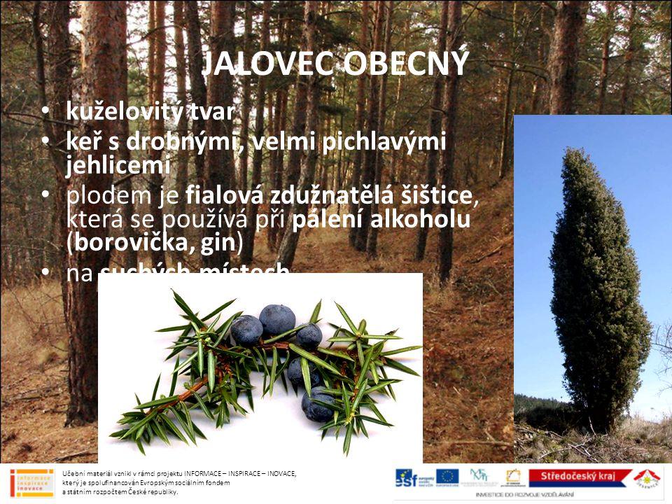 JALOVEC OBECNÝ kuželovitý tvar keř s drobnými, velmi pichlavými jehlicemi plodem je fialová zdužnatělá šištice, která se používá při pálení alkoholu (