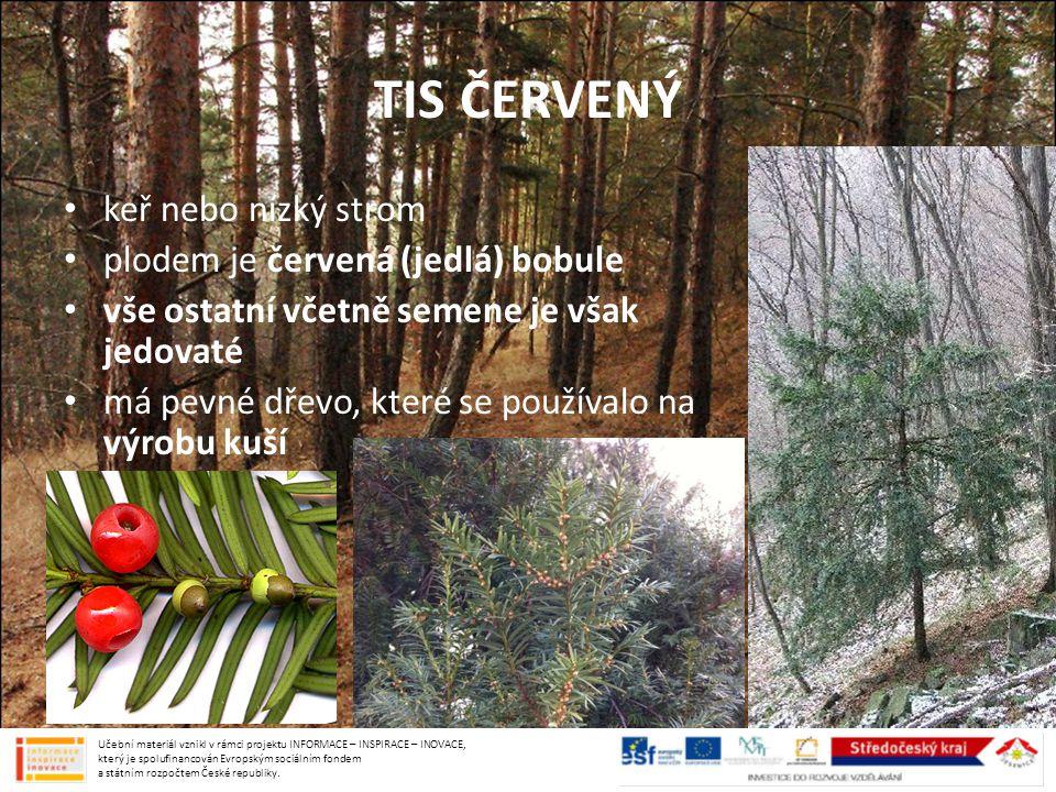 TIS ČERVENÝ keř nebo nízký strom plodem je červená (jedlá) bobule vše ostatní včetně semene je však jedovaté má pevné dřevo, které se používalo na výr