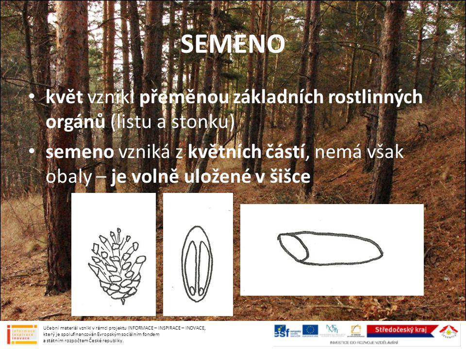BOROVICE VEJMUTOVKA v Česku pěstovaná pro dřevo zarůstání skal velké dlouhé šišky Učební materiál vznikl v rámci projektu INFORMACE – INSPIRACE – INOVACE, který je spolufinancován Evropským sociálním fondem a státním rozpočtem České republiky.
