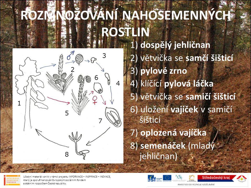 CYPŘIŠ VŽDYZELENÝ vysoký strom podobný našemu jalovci typický pro Středomoří Učební materiál vznikl v rámci projektu INFORMACE – INSPIRACE – INOVACE, který je spolufinancován Evropským sociálním fondem a státním rozpočtem České republiky.