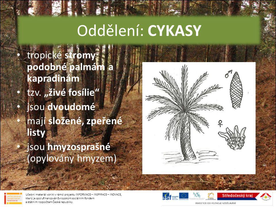 """oddělení: CYKASY tropické stromy podobné palmám a kapradinám tzv. """"živé fosílie"""" jsou dvoudomé mají složené, zpeřené listy jsou hmyzosprašné (opylován"""