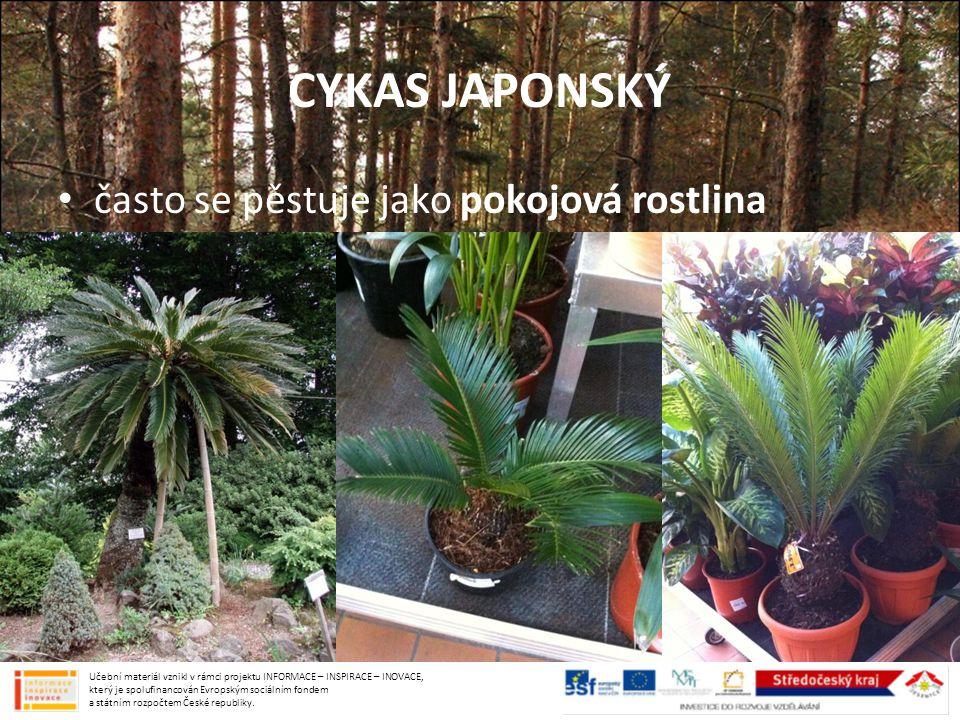 CYKAS JAPONSKÝ často se pěstuje jako pokojová rostlina Učební materiál vznikl v rámci projektu INFORMACE – INSPIRACE – INOVACE, který je spolufinancov