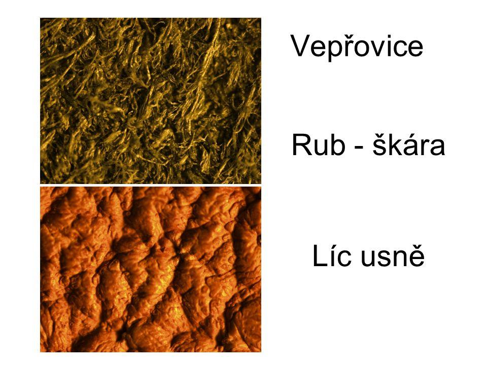 Vepřovice Rub - škára Líc usně