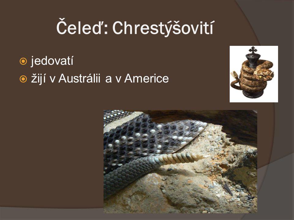 Čeleď: Chrestýšovití  jedovatí  žijí v Austrálii a v Americe