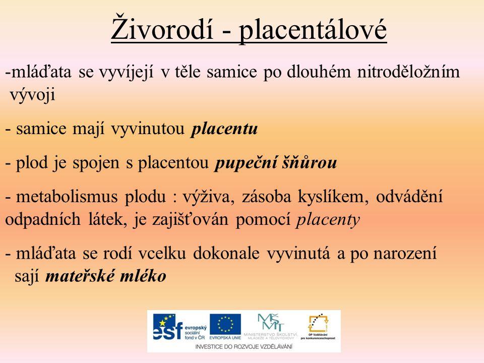 Živorodí - placentálové -mláďata se vyvíjejí v těle samice po dlouhém nitroděložním vývoji - samice mají vyvinutou placentu - plod je spojen s placentou pupeční šňůrou - metabolismus plodu : výživa, zásoba kyslíkem, odvádění odpadních látek, je zajišťován pomocí placenty - mláďata se rodí vcelku dokonale vyvinutá a po narození sají mateřské mléko