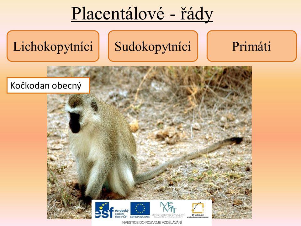 Placentálové - shrnutí 1) Pokus se najít rozdílné znaky mezi vačnatci a mezi placentály.