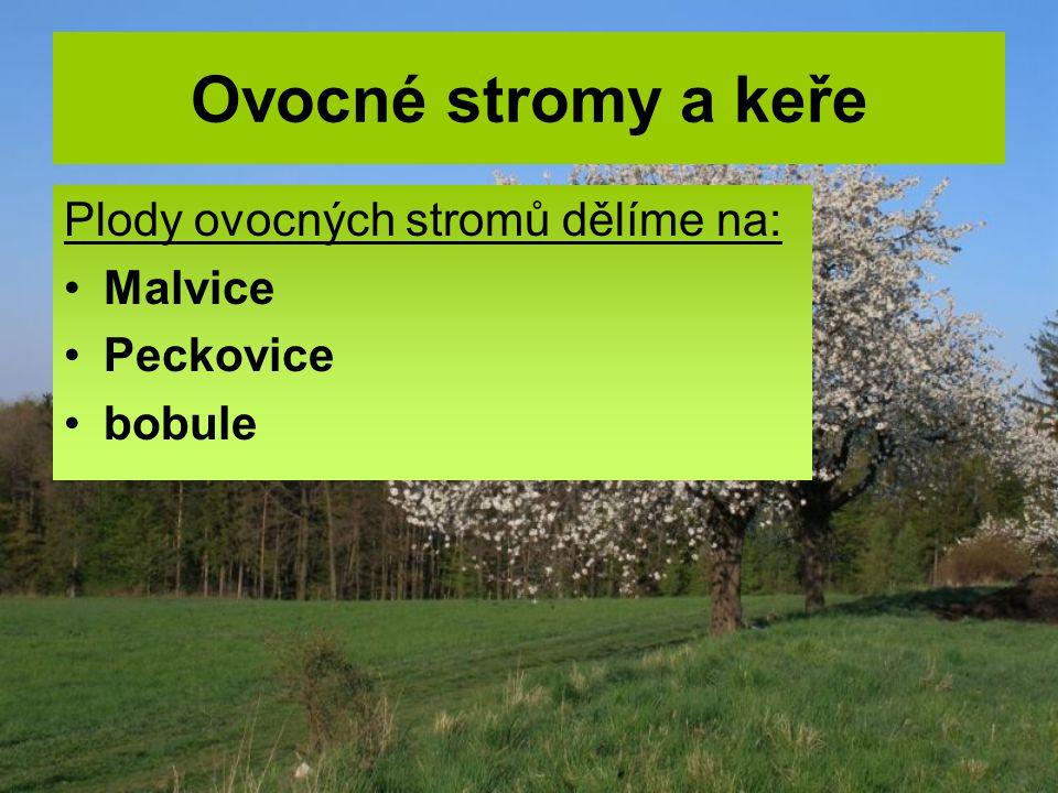 Ovocné stromy a keře Plody ovocných stromů dělíme na: Malvice Peckovice bobule