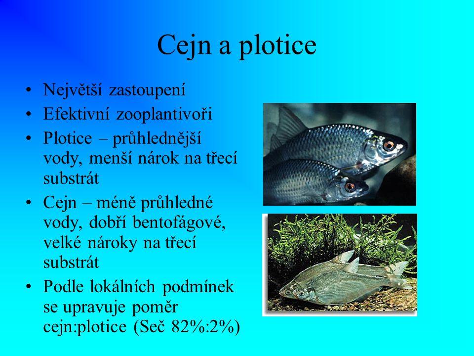 Cejn a plotice Největší zastoupení Efektivní zooplantivoři Plotice – průhlednější vody, menší nárok na třecí substrát Cejn – méně průhledné vody, dobř