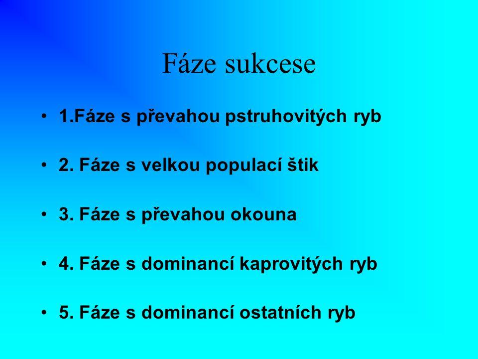Fáze sukcese 1.Fáze s převahou pstruhovitých ryb 2. Fáze s velkou populací štik 3. Fáze s převahou okouna 4. Fáze s dominancí kaprovitých ryb 5. Fáze