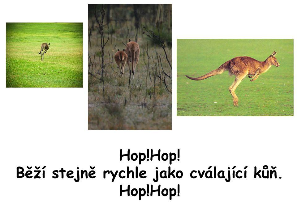 Hop!Hop! Běží stejně rychle jako cválající kůň. Hop!Hop!