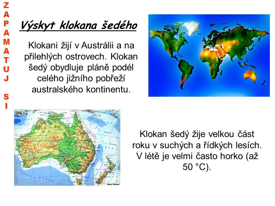 Výskyt klokana šedého Klokani žijí v Austrálii a na přilehlých ostrovech. Klokan šedý obydluje pláně podél celého jižního pobřeží australského kontine