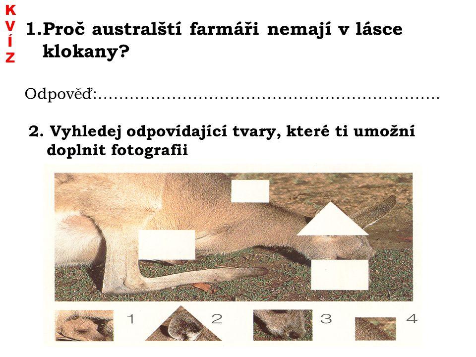 2. Vyhledej odpovídající tvary, které ti umožní doplnit fotografii 1.Proč australští farmáři nemají v lásce klokany? Odpověď:……………………………………………………….. K