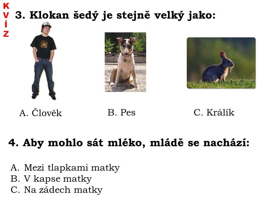3. Klokan šedý je stejně velký jako: A. Člověk B. PesC. Králík 4. Aby mohlo sát mléko, mládě se nachází: A. Mezi tlapkami matky B. V kapse matky C. Na