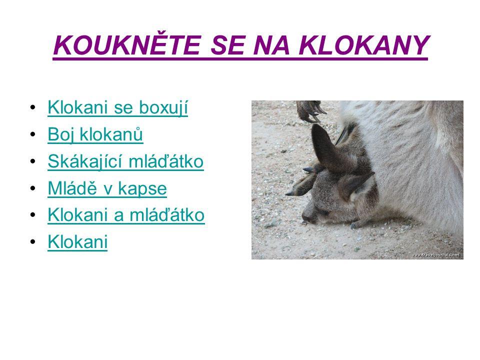 KOUKNĚTE SE NA KLOKANY Klokani se boxují Boj klokanů Skákající mláďátko Mládě v kapse Klokani a mláďátko Klokani