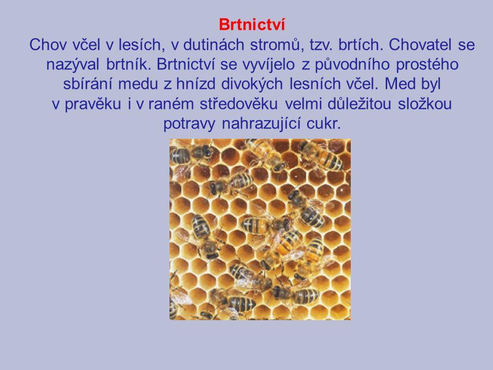 Brtnictví Chov včel v lesích, v dutinách stromů, tzv. brtích. Chovatel se nazýval brtník. Brtnictví se vyvíjelo z původního prostého sbírání medu z hn