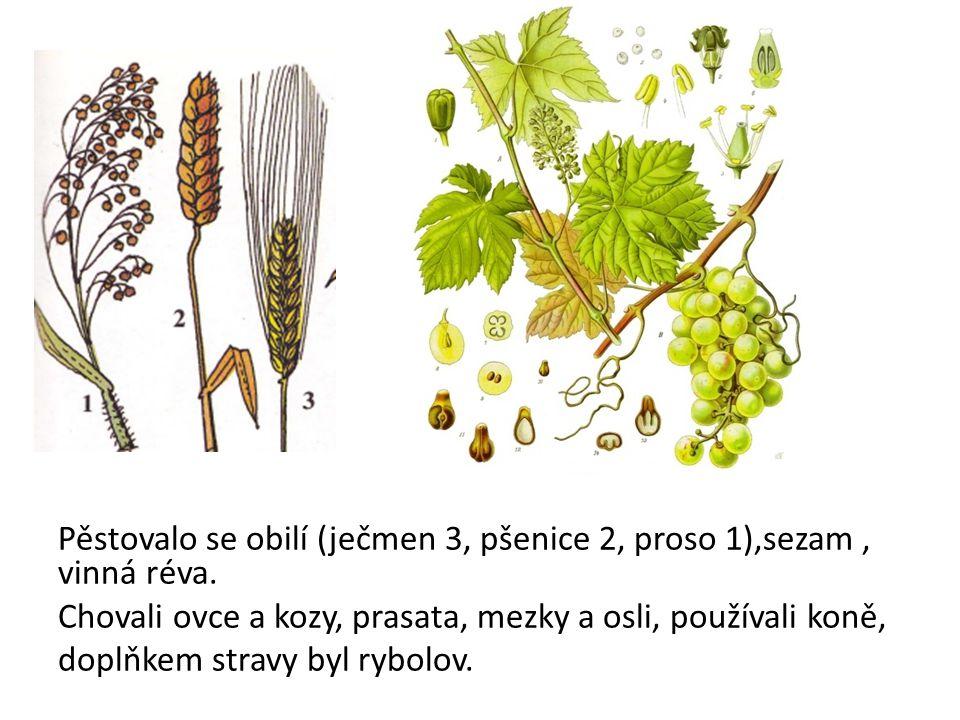 Pěstovalo se obilí (ječmen 3, pšenice 2, proso 1),sezam, vinná réva.