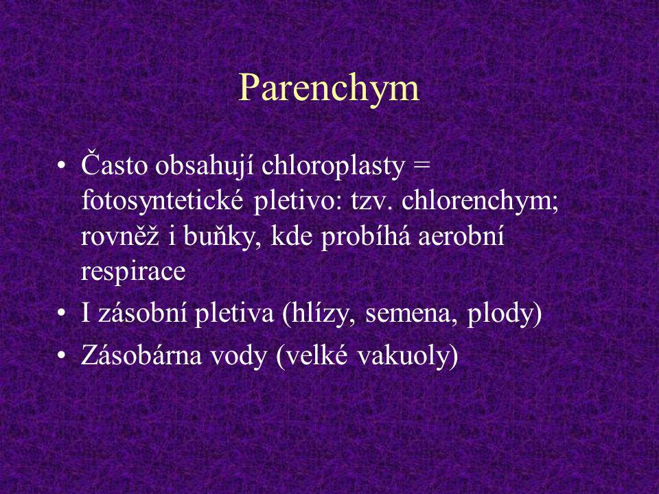 Parenchym Často obsahují chloroplasty = fotosyntetické pletivo: tzv. chlorenchym; rovněž i buňky, kde probíhá aerobní respirace I zásobní pletiva (hlí