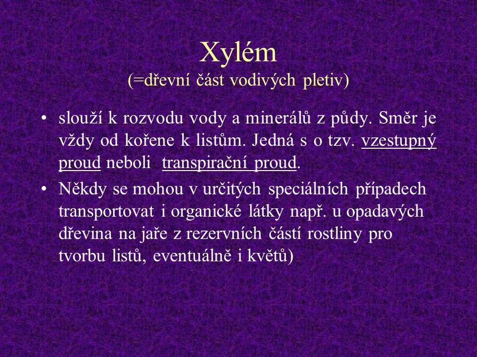 Xylém (=dřevní část vodivých pletiv) slouží k rozvodu vody a minerálů z půdy. Směr je vždy od kořene k listům. Jedná s o tzv. vzestupný proud neboli t