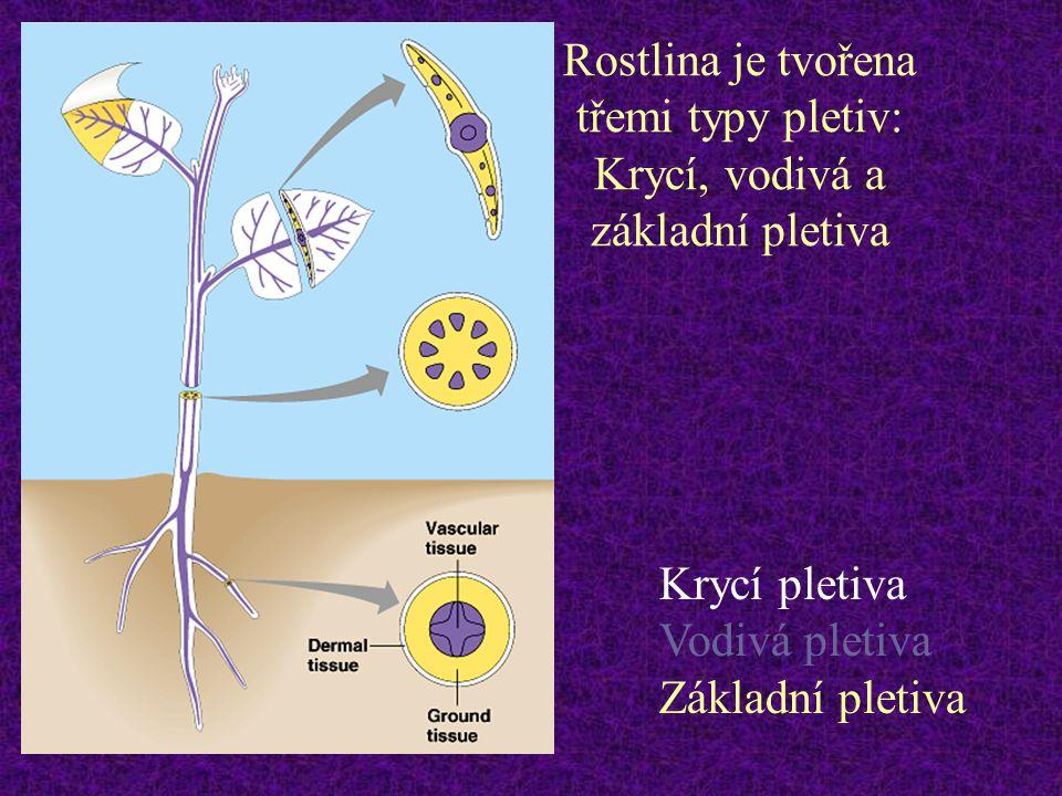 Rostlina je tvořena třemi typy pletiv: Krycí, vodivá a základní pletiva Krycí pletiva Vodivá pletiva Základní pletiva