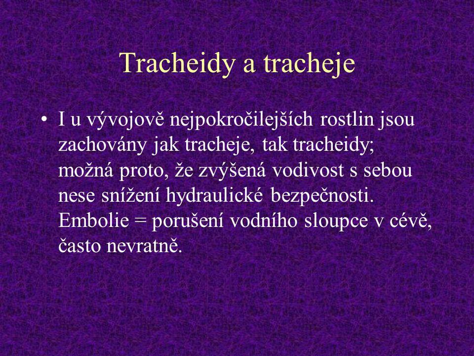 Tracheidy a tracheje I u vývojově nejpokročilejších rostlin jsou zachovány jak tracheje, tak tracheidy; možná proto, že zvýšená vodivost s sebou nese