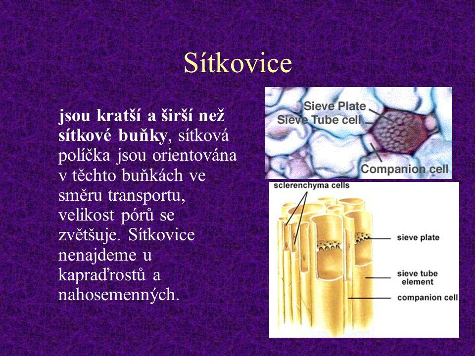 Sítkovice jsou kratší a širší než sítkové buňky, sítková políčka jsou orientována v těchto buňkách ve směru transportu, velikost pórů se zvětšuje. Sít