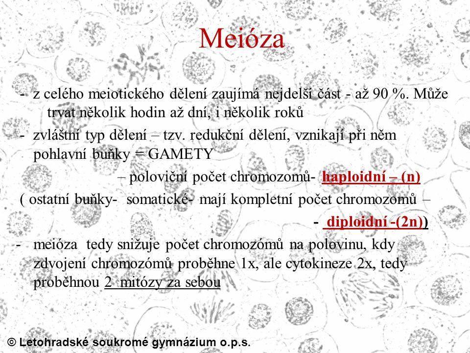 © Letohradské soukromé gymnázium o.p.s. Meióza - z celého meiotického dělení zaujímá nejdelší část - až 90 %. Může trvat několik hodin až dní, i někol