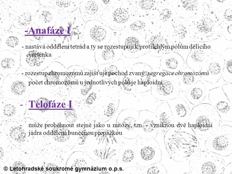 © Letohradské soukromé gymnázium o.p.s. -Anafáze I - nastává oddělení tetrád a ty se rozestupují k protilehlým pólům dělicího vřeténka - rozestup chro