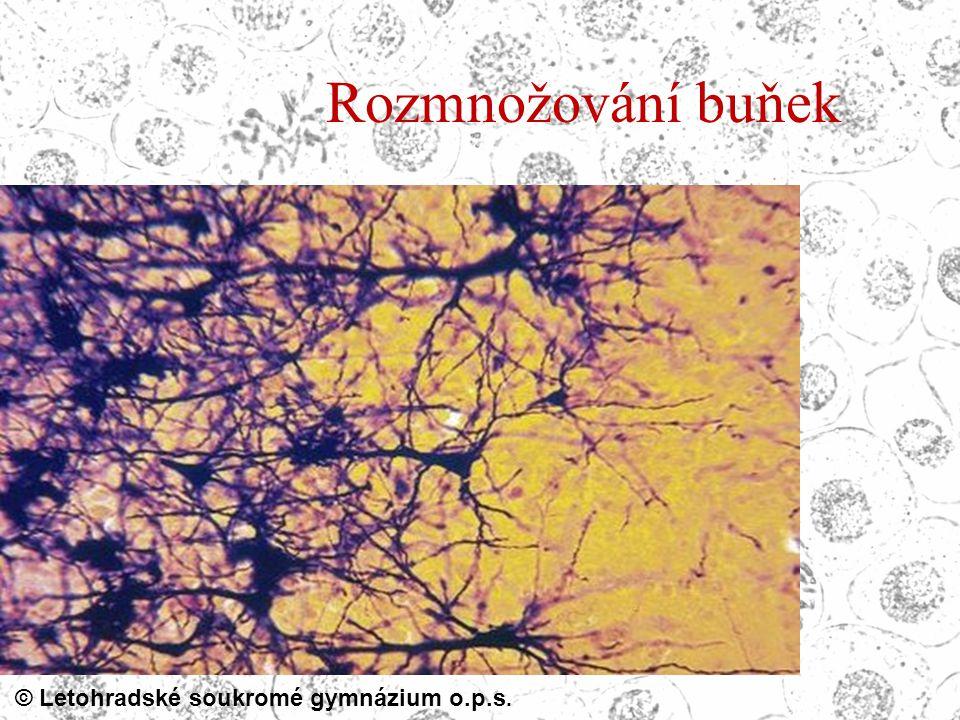 © Letohradské soukromé gymnázium o.p.s. Rozmnožování buňek